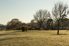 Lawn field with dry trees - winter Australia Royalty Free Stock Images