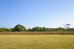 Lawn field and trees with clear sky Royalty Free Stock Images