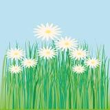 Lawn, flower, daisy, spring, summer Stock Photos
