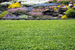 Lawn with flowers. Beautiful lawn grass with flowering plants on the rock garden in the background Stock Photos