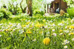 Lawn with flowers Stock Images