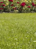 Lawn and Flowers. Garden scene of lawn and red flowers in background Stock Photography