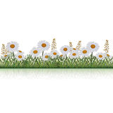Lawn with flowers chamomile and herbs Stock Photo