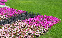 Lawn and flowers Royalty Free Stock Photos