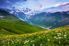 From the lawn with flowers opens a panoramic view. From the lawn with flowers opens a panoramic view of the broad river, rocky mountains in the snow, green stock photo