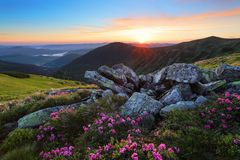 A lawn with flowers of rhododendron among large stones. Mountain landscape with sunrise with interesting sky and clouds. royalty free stock images