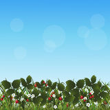 Lawn with flowers strawberries and herbs Stock Image