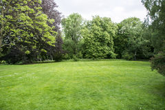 Lawn in forest Royalty Free Stock Photos