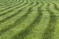 Lawn with freshly cut grass Royalty Free Stock Photos