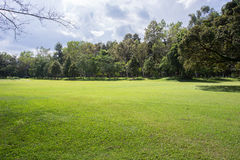Lawn of golf course, green grass field Stock Image