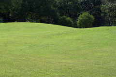 Lawn of golf course, green grass field Stock Images