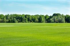 Lawn gras field Royalty Free Stock Photo