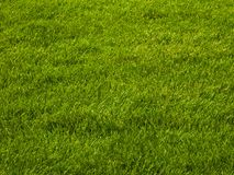 Lawn grass. Fresh green grass on the lawn, texture Stock Image