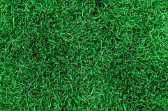 Lawn grass. Top view of fresh lawn grass Royalty Free Stock Photos
