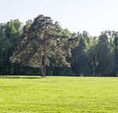 Lawn of grass with big tree on forest background. nature. Lawn of grass with big tree on forest background in spring. nature royalty free stock image