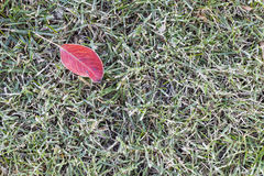 Lawn grass covered with frost Royalty Free Stock Photography
