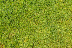 Lawn grass in football field. Green lawn grass in football field background Royalty Free Stock Image