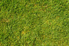 Lawn grass in football field. Green lawn grass in football field background Stock Photography
