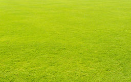 Lawn grass in football field. Green lawn grass in football field background Royalty Free Stock Photos