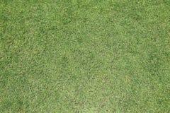 Lawn grass green Stock Photo