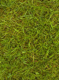 Lawn with grass and moss Stock Images