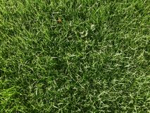 Lawn grass pattern Royalty Free Stock Photo