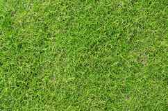 Lawn Grass Texture Stock Photos