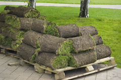 Lawn grass twisted into rolls Stock Photo