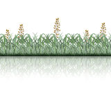 Lawn grass with white stripes and reflection Royalty Free Stock Photography
