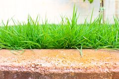 Lawn green Royalty Free Stock Photo