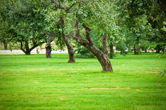 Lawn with green grass Royalty Free Stock Photo