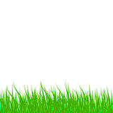 Lawn green grass abstract natural background Royalty Free Stock Photography