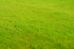 Lawn Royalty Free Stock Photos
