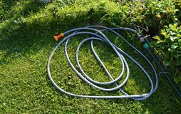 Lawn with green grass and a rubber hose for watering the garden.  royalty free stock photography