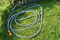Lawn with green grass and a rubber hose for watering the garden.  stock photos