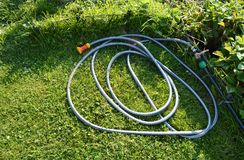 Lawn with green grass and a rubber hose for watering the garden.  stock image