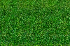 Lawn, green grass in summer. View from above. Close-up, natural background stock photo