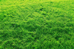 Lawn of green grass texture Stock Photo