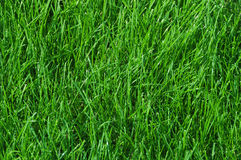 Lawn of green grass, tinted green Royalty Free Stock Photo