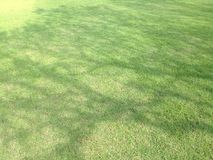 Lawn green have shadow tree are pattern Stock Photography