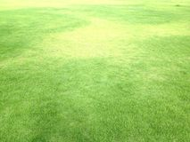 lawn green have shadow tree are pattern Royalty Free Stock Image