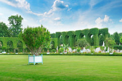 Lawn and hedge in a  park Royalty Free Stock Photos