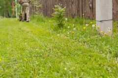 lawn Hem- gräsmatta Den ansade gräsmattan royaltyfri foto