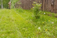 lawn Hem- gräsmatta Den ansade gräsmattan royaltyfri fotografi