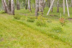 lawn Hem- gräsmatta Den ansade gräsmattan royaltyfria foton