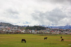 Lawn with horses in the background of the city of Bakuriani. Lawn with four graceful horses on the background of the city of Bakuriani, a lot of houses on the Stock Photos