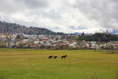 Lawn with horses in the background of the city of Bakuriani. Lawn with three graceful horses on the background of the city of Bakuriani, a lot of houses on the Royalty Free Stock Images