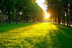 Lawn i parkera arkivbild