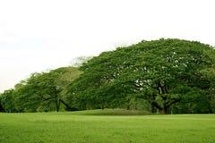 Lawn i trädgård Arkivbild