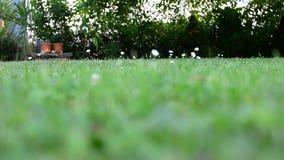 Lawn i trädgård arkivfilmer